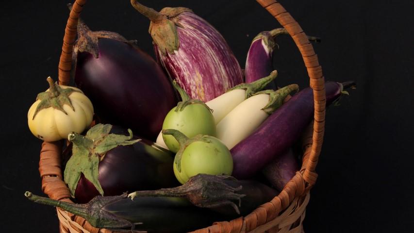 Eggplant Seed