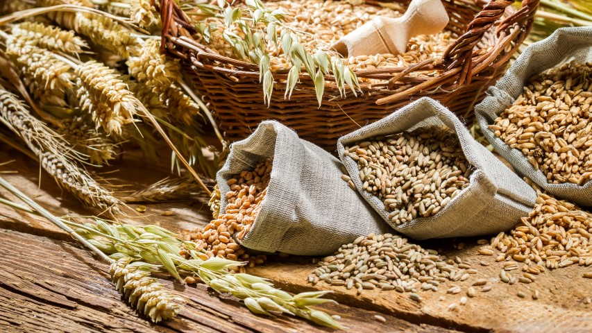 Small Grain Seed