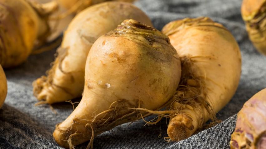 Swede Rutabaga Seed